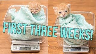 Download UPDATE: Baby Hank's First Weeks! Video
