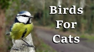 Download Videos For Cats To Watch - AWESOME One Hour of Birds Coming and Going Video