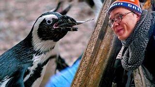 Download JANUSZ wśród pingwinów Video