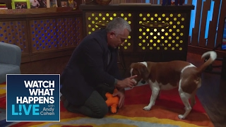 Download EXCLUSIVE: Cesar Millan Teaches Andy and Wacha New Tricks | WWHL Video