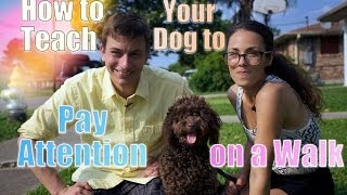 Download How to STOP Leash Pulling: TEACH Your DOG To WALK PERFECT on a Leash Video