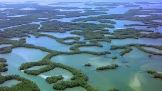Download Seagrasses and Mangroves Video