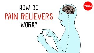 Download How Do Pain Relievers Work? - George Zaidan Video