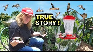 Download HUMMINGBIRDS NEST in HOUSE Window FEEDER Raise BABIES on EASY Recipe Video