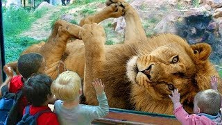 Download FUNNY Animals Trolling Babies and Kid in The Zoo|| Funny Baby and Pet Video