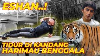 Download AKHIRNYA BISA TIDURAN DI KANDANG ESHAN, HARIMAU ALSHAD..! Video