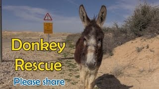 Download Donkey Rescue in Israel - If you liked the video, please share it. Video