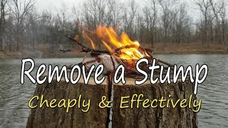 Download How to Remove a Stump, Cheaply & Effectively! Video