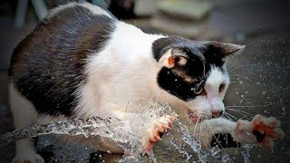 Download Crazy Cats 😹😹 Funny Cats Love To Play Water (Part 1) [Funny Pets] Video