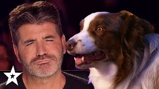 Download Simon Cowell's FAVOURITE Dog Auditions On Got Talent! | Got Talent Global Video