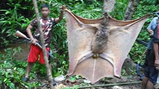 Download GIANT BAT OR SOMETHING ELSE? Video