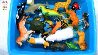 Download Learn Sea Animals Farm Animals Wild Zoo Animals Names English Korean. 바다동물 농장동물 야생 동물원동물 이름 배우기 영어. Video