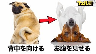 Download 【衝撃】犬の気持ちがよくわかる5つの方法 Video