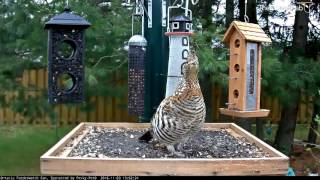 Download Ontario FeederWatch Cam Back Online for 2016-2017 - Nov. 3, 2016 Video