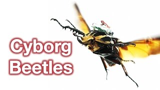 Download How To Build A Cyborg Beetle Video