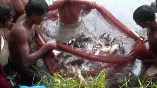 Download Shrimp Pond in Bagerhat,Bangladesh Video