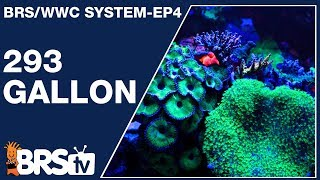 Download This is how to keep a 293gal Mixed Reef Tank - The BRS/WWC System Ep4   BRStv Video