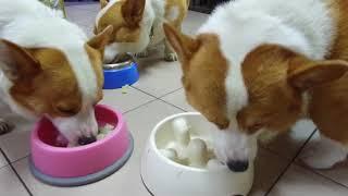 Download [連環泡]林媽媽鮮食晚餐,開飯啦! Video
