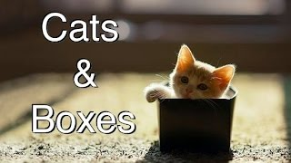 Download Funny Videos 2014 - compilation of Cats and Boxes Video