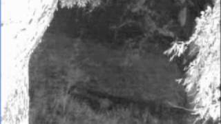 Download Lion Sounds at Elephant Plains - 07/09/10 - Pt 2 Video