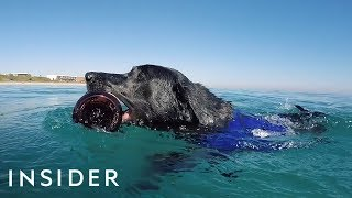 Download Dog Dives To Help Clean Polluted Oceans Video