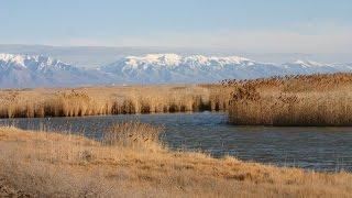Download Bear River Migratory Bird Refuge Auto Tour - Utah Outdoor Activities Video