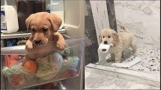 Download Cute baby animals Videos Compilation cute moment of the animals - Cutest Animals #2 Video