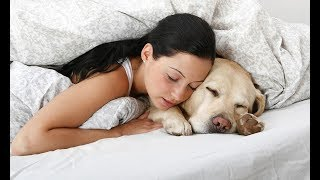 Download Dogs Sleeping with Owners Compilation 2017 Video