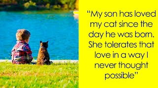 Download Wholesome Cat Posts That Will Make Your Day Way Better Video