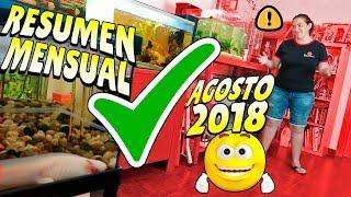 Download Resumen Mensual Agosto 2018 ⭐ Acuarios y Mascotas Video
