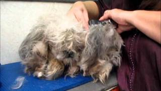 Download Clipping matted dog Video