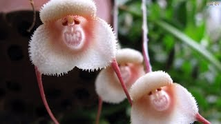 Download Top 10 Flowers That Look Like Animals Video