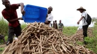Download Ibi Batéké, l'aventure carbone en Afrique centrale (2014) Video