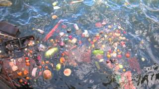 Download Cruis Ship dumping serious.m4v Video
