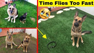 Download Amazing Photos That Prove Time Goes Way Too Fast Video
