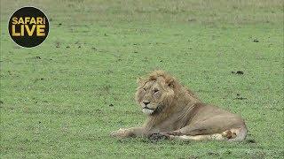 Download safariLIVE - Sunrise Safari - December 14, 2018 Video