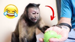 Download Monkey Reacts To Splat Balls! (FUNNY) Video