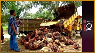 Download 🇮🇩Indonesia: The Price of Palm Oil l 101 East Video