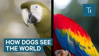 Download Dogs can see more than just black and white Video