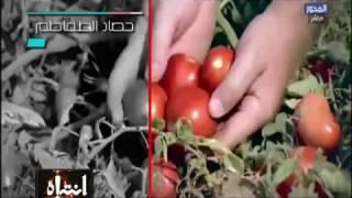 Download انتباه | الطريقة الصحيحة لإنتاج الكاتشب والصلصة وقارنها بنفسك بما يحدث في مصر Video