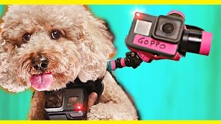 Download GoPro on a Dog! Video