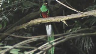 Download Quetzal Rare Bird Spiritual Sacred Maya Aztec - Instrumental Music Relax for the Soul Video
