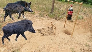 Download DIY Wild Pig Trap using 1.5L Coca Cola - You know about How to Make Wild Pig using 1.5L Coca Cola Video