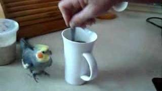 Download Bird makes coffee Video