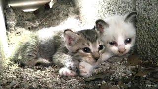 Download 奥で寝ていたキジトラ子猫もこっちにやってきた。 Video
