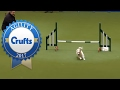 Download Hilarious Jack Russell Goes Crazy with Excitement at Crufts 2017! Video