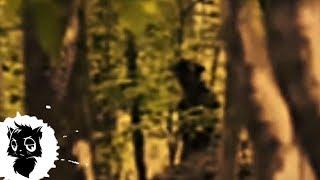 Download 5 МОНСТРОВ НА БОЛОТЕ СНЯТЫХ НА КАМЕРУ [Черный кот] Video