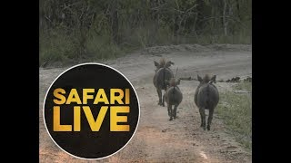 Download safariLIVE - Sunset Safari - May, 25. 2018 Video