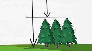 Download Enhanced Forest Inventories (Chief Scientist Vlog #3) Video