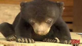 Download Sleepy Bear Can't Stay Awake Video